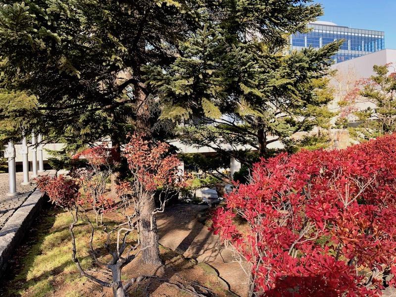 札幌市役所庭園の紅葉